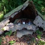 Haus für Waldzwergli.